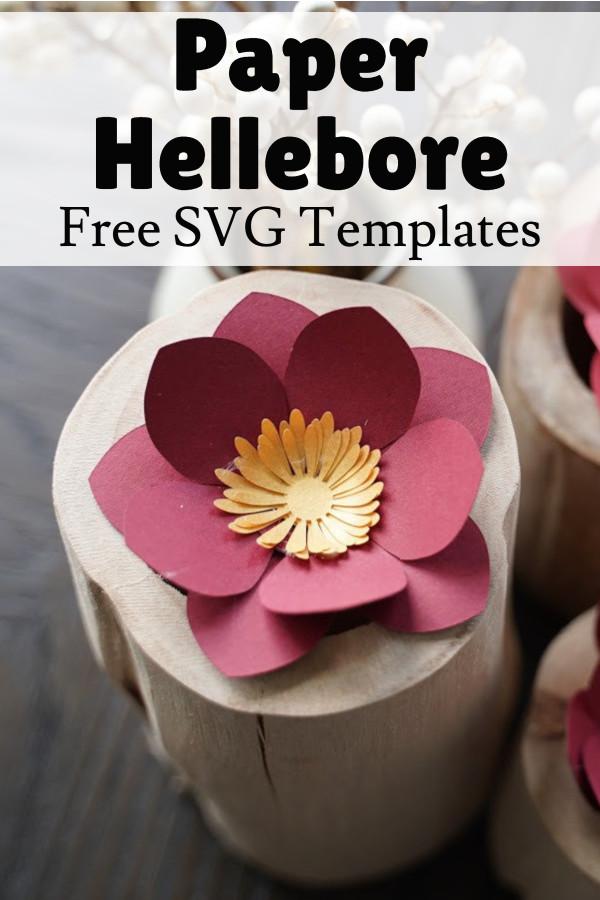 paper hellebore flower